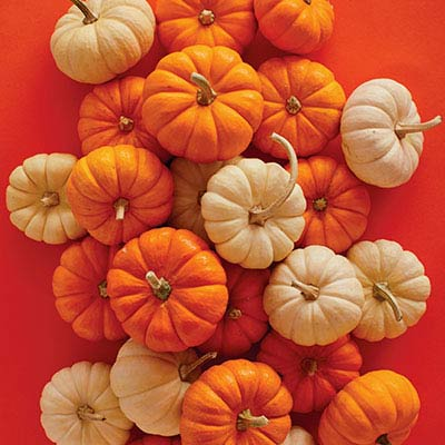 View Pumpkin Recipes